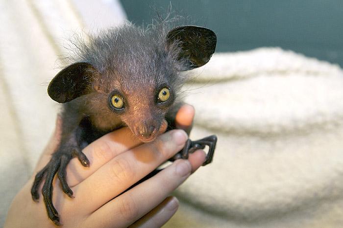 Quali sono gli animali più strani del mondo 8