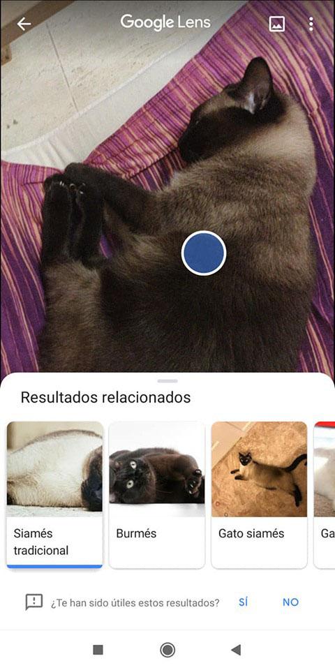 Google Lens: cos'è, per cosa posso usarlo e come posso installare questa applicazione sul mio smartphone? 7